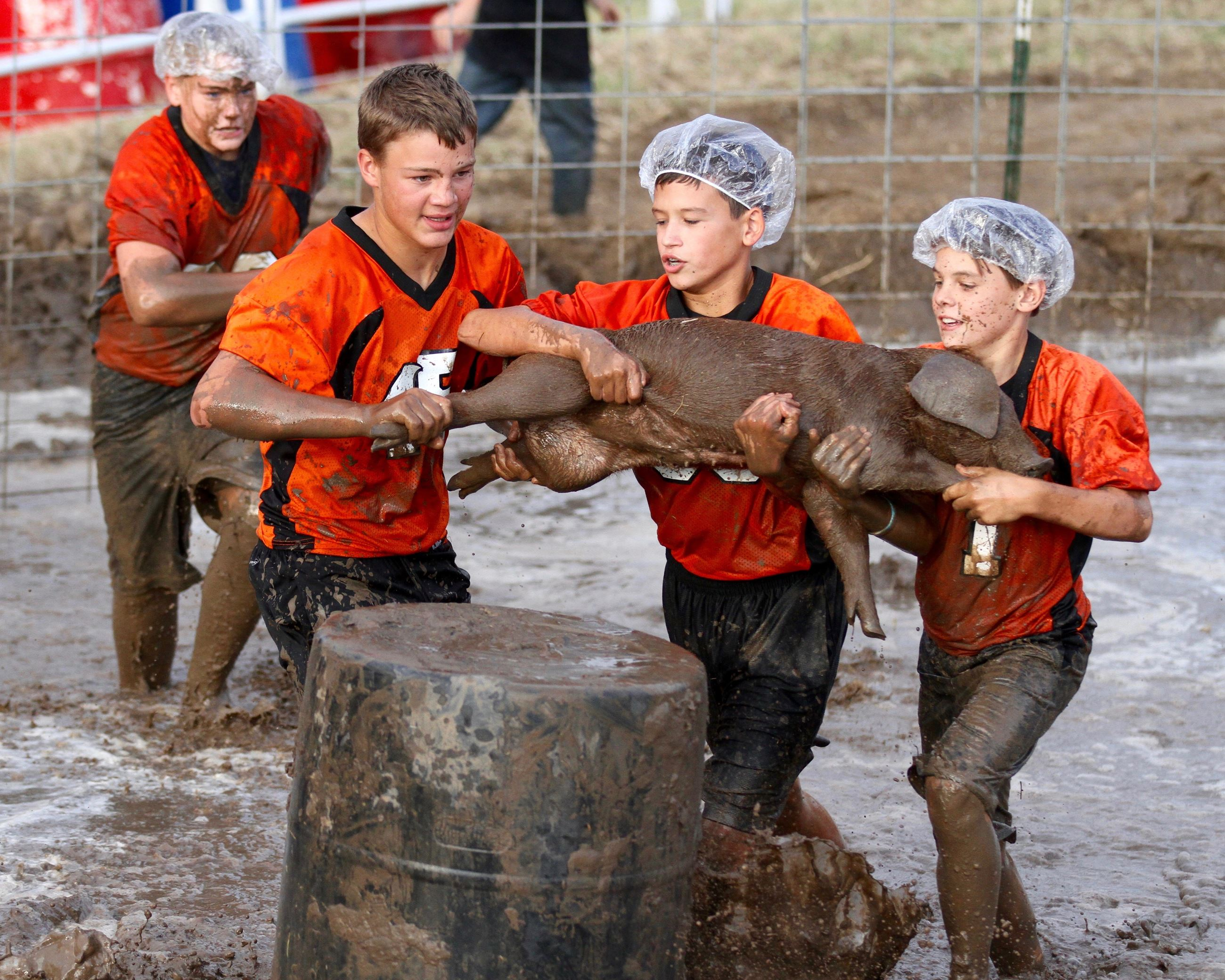 Four muddy boys wrestling a pig