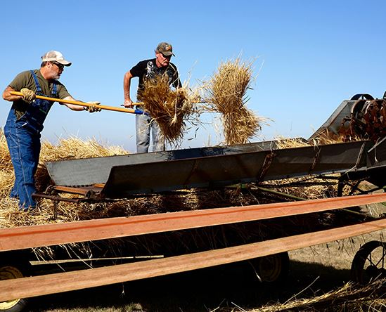 two farmers working on the harvest
